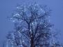 Rozžíhání vánočního stromečku - Žabovřesky 3.12.2009